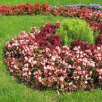 Цветы нашей жизни
