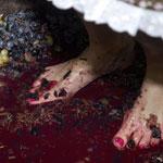 Фестиваль Российских вин