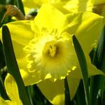 А у нас во дворе весна