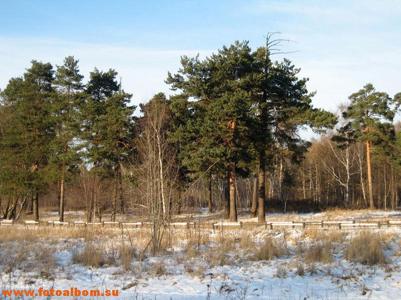 Кузьминский лес