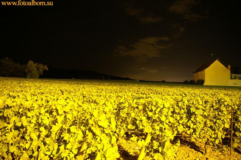 Ночь на винограднике