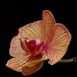 «Утопия» – идеальный мир орхидей и природы