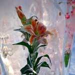 Цветы и лёд