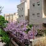 Иерусалим. Цветы и камни