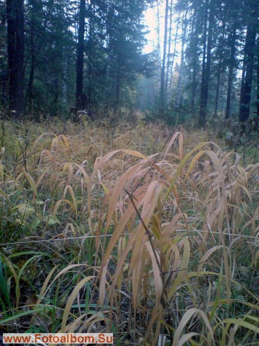 заболоченная поляна