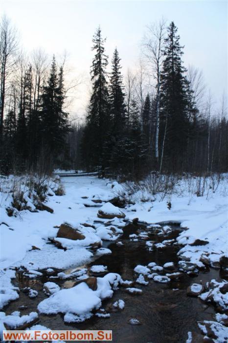 зима, очень уж красив лес зимой