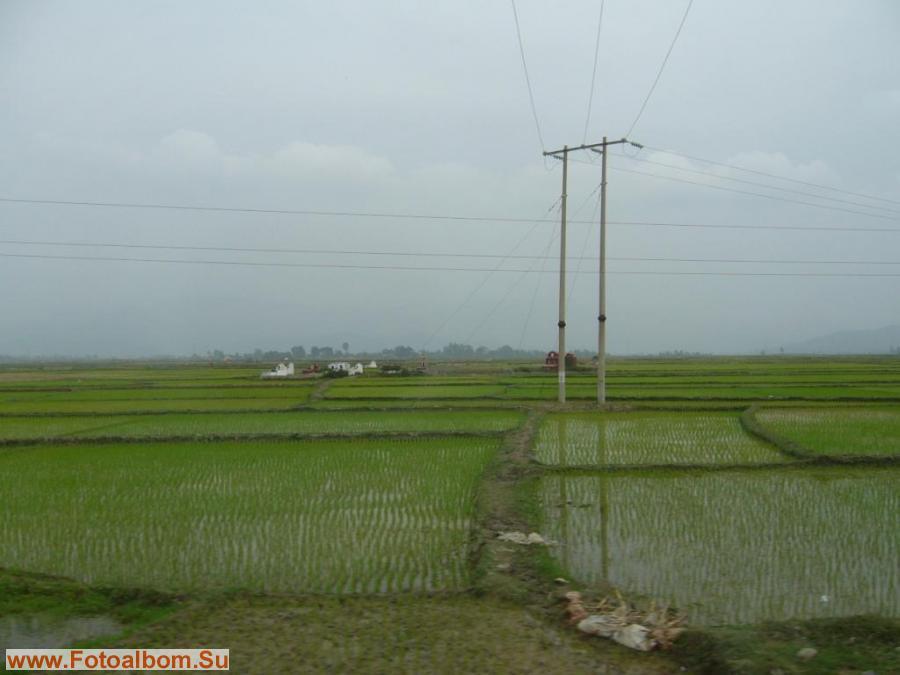 Рисовые поля. На дальнем плане кладбище