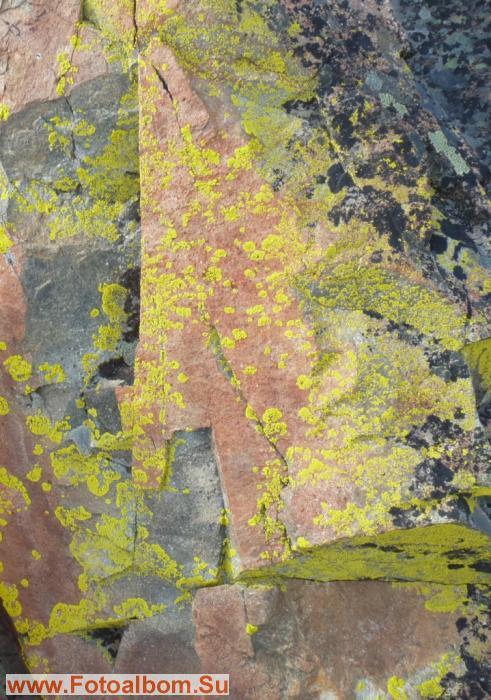 Отвесная стена вся в желтизне лишайниковой