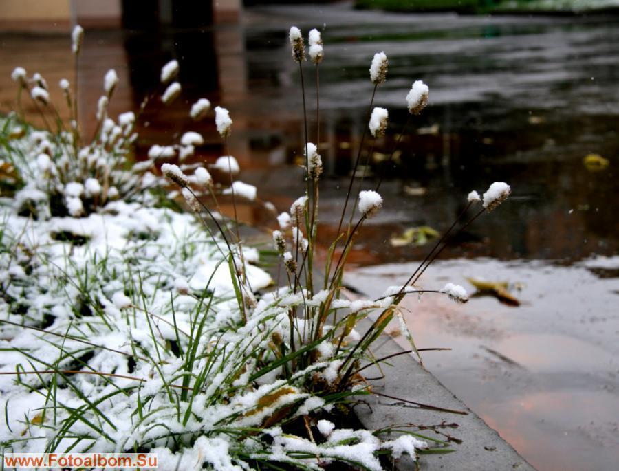 Травинки превратились в снежные камыши