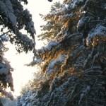 Только солнце, только воздух, снег и серебро