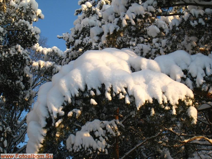 Белоснежные шапки снега на лапах сосен явили свою чистейшую красоту