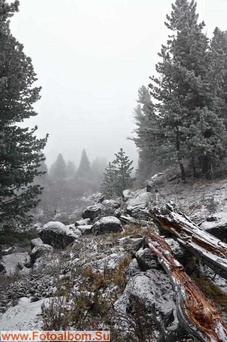 Утром засыпало снегом. Видимости - 0. Сидим. Едим. Рубим сучья. У Леши