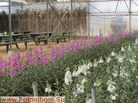 Плантации цветов,отправляемых на экспорт