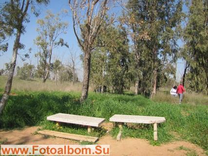 Удобные скамейки в лесной гуще